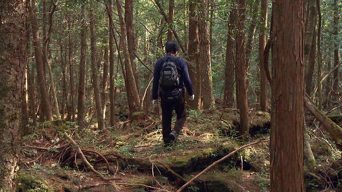 Este adevărat că în Japonia există o pădure a suicidului?